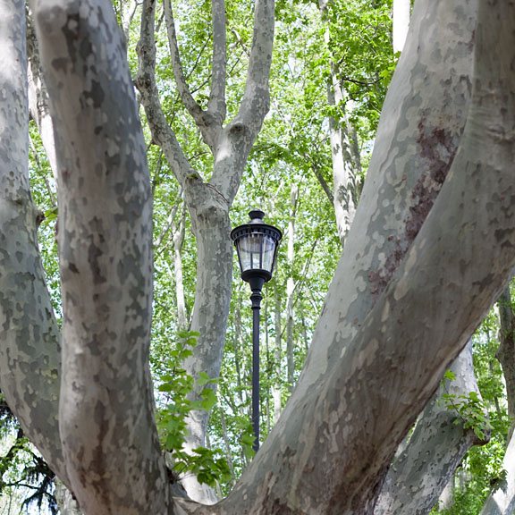 Lamppost in Gianicolo's garden - Italy/North - Rome - April 2013 - Vegetation